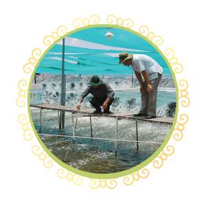Bạt Lót Hồ Chứa Nước Bình Phước, Bạt Lót Ao Chứa Nước HDPE